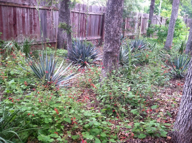 native-backyard-woodland-3-years-later